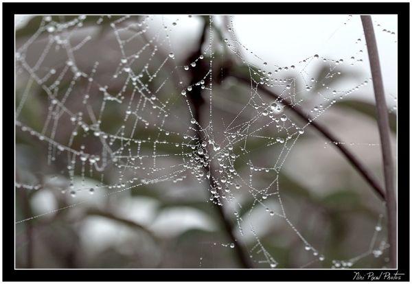 b/w on web...