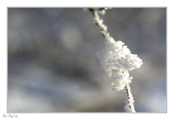 Frost 2...