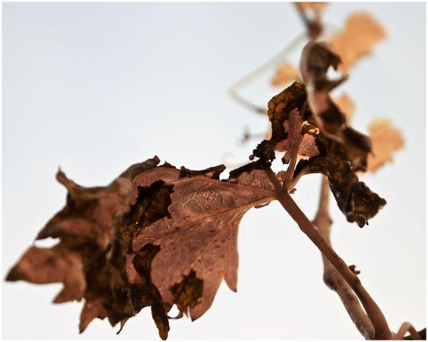 Fall dies...