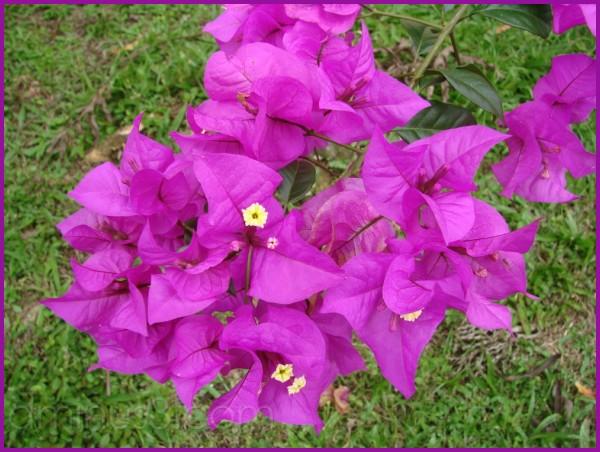 Purple beauty in Costa Rica