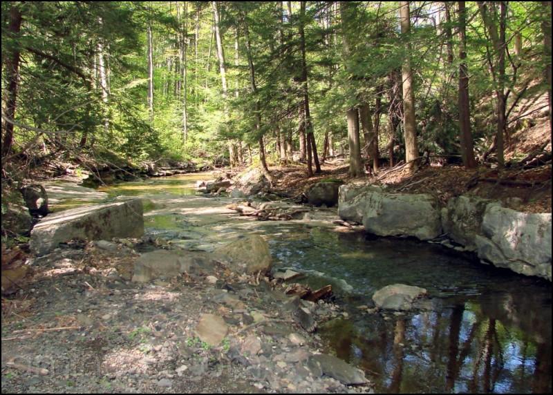 Woodland creek scene in Niles, NY