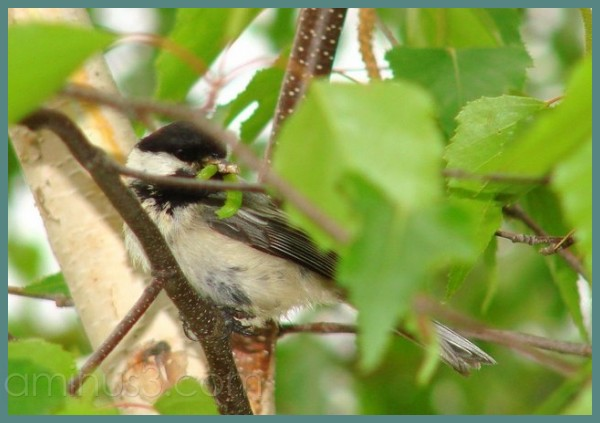 Chickadee parent brings lunch