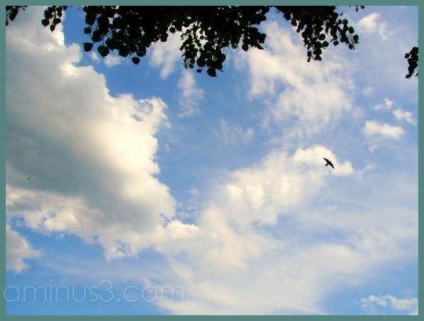 It's a bird, it's a plane...it really IS a bird!
