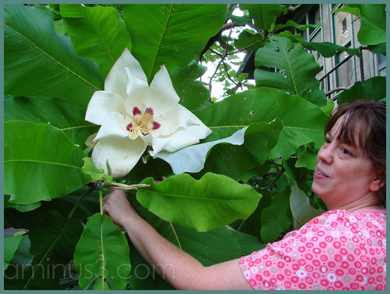 Giant Magnolia and Cousin Connie