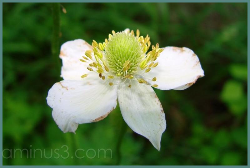 Delicate flower, Upper Buttermilk Falls, Ithaca NY
