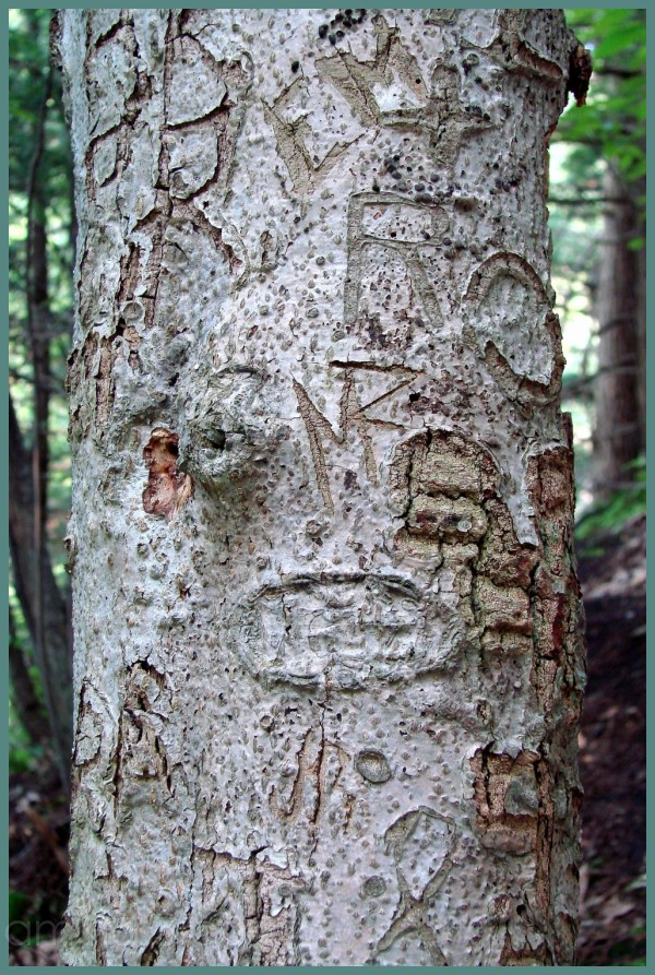 Poor abused tree!