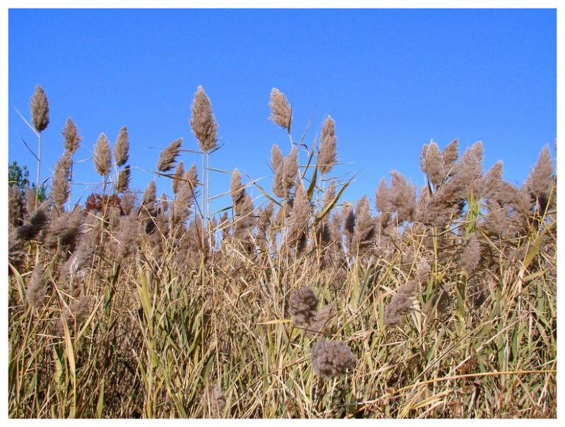 Ornamental grass at the recycle center