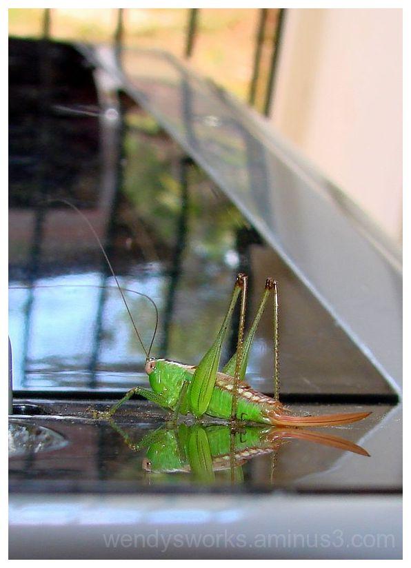Grasshopper Reflects