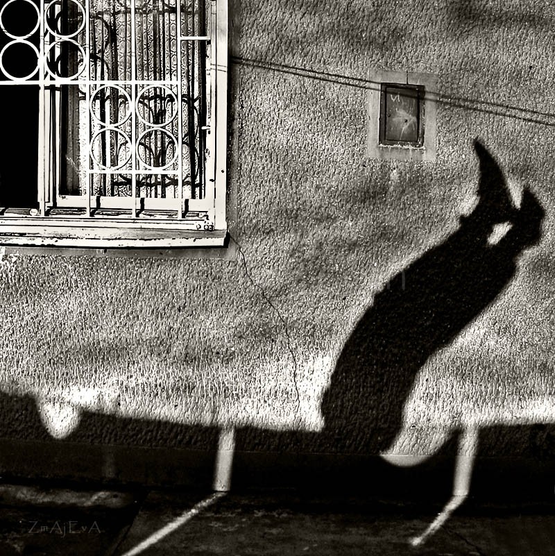 shadow on the wall