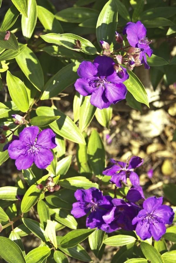 Ahh pretty flowers