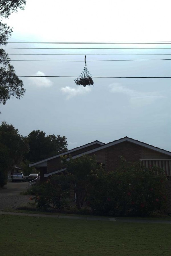 tree rocket stuck on wire