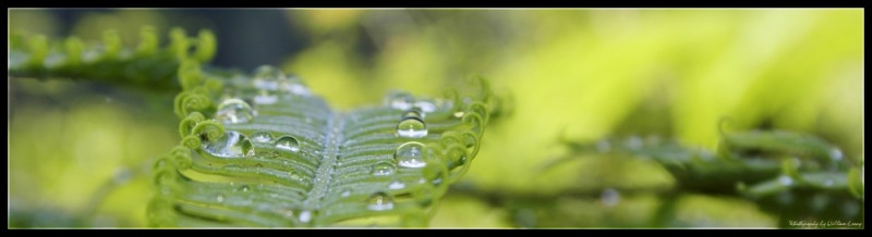 dew fern nature leaf green droplets water