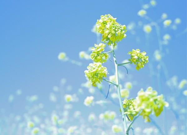in open fields of wild flowers