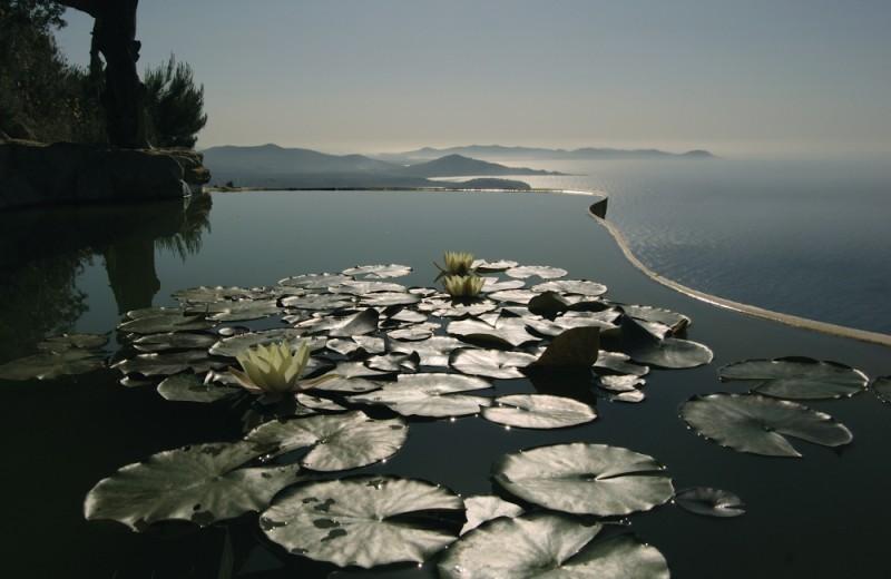 lotus flowers in Ibiza