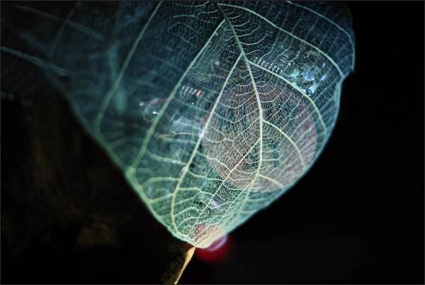 robotic leaf