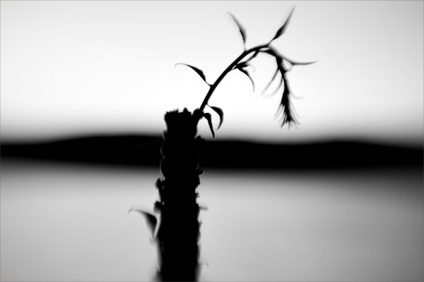 plant in black and white