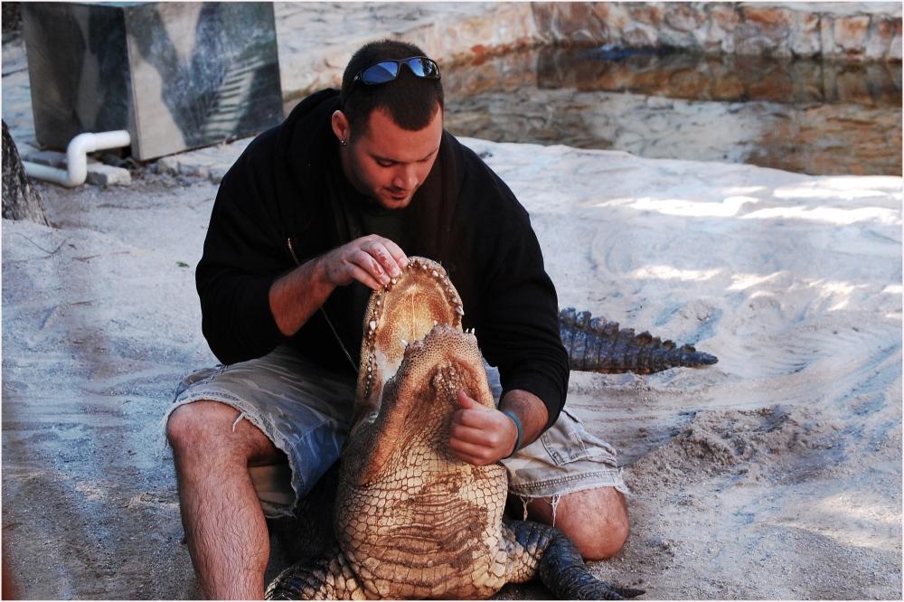 Alligator Stunt at Everglades