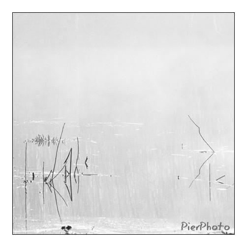 Brume sur le marais - Mist on the marsh