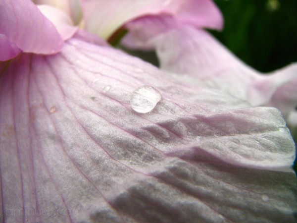 An iris with a waterdrop