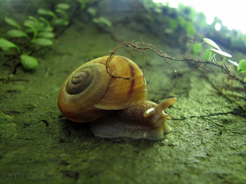A close-up of a snail
