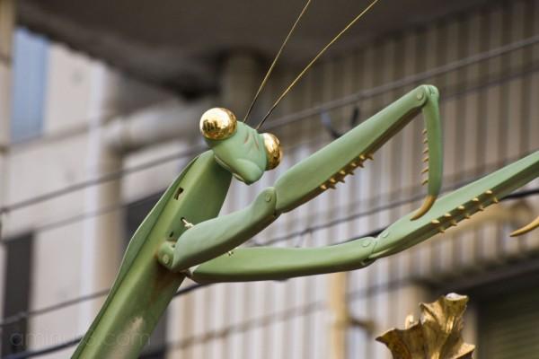 Toro Yama Mantis