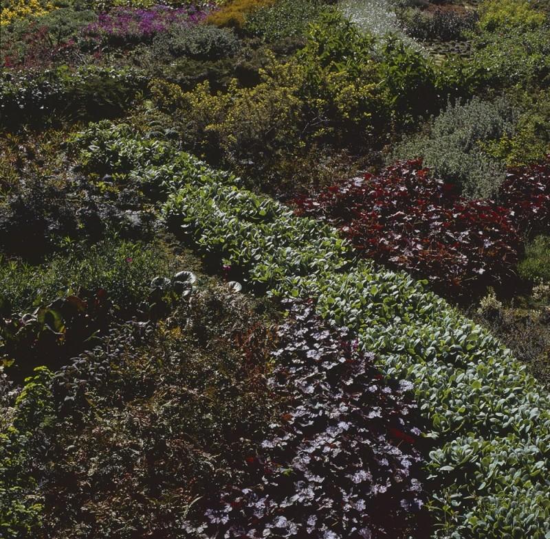 Garden and light