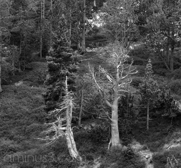 Dos arbres morts