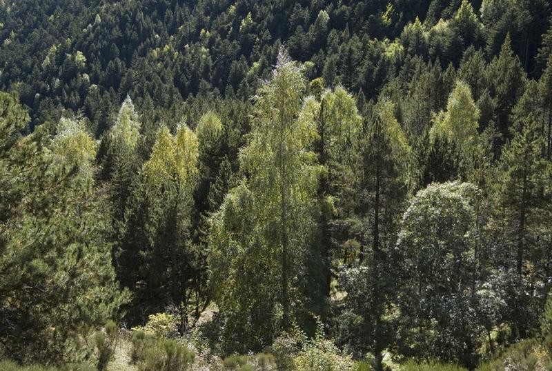 Bosc lluminós