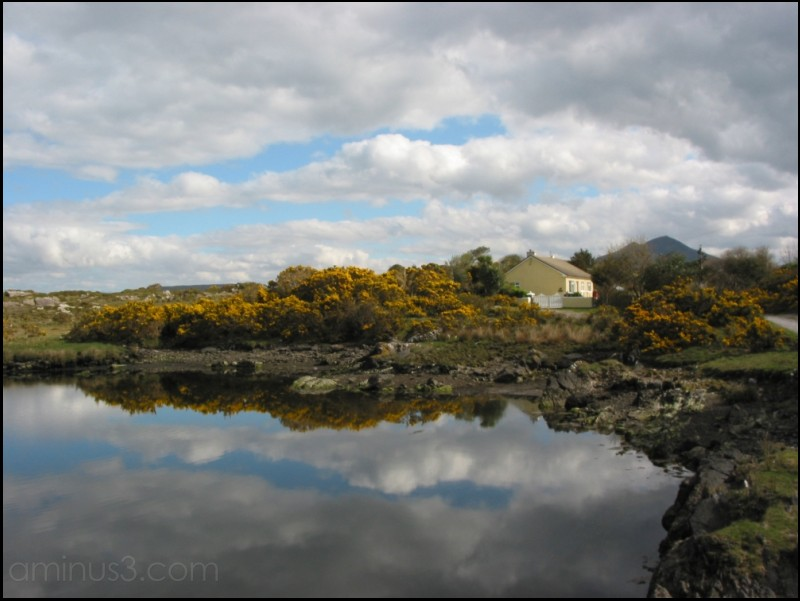 a quiet home reflecting gorse and sky