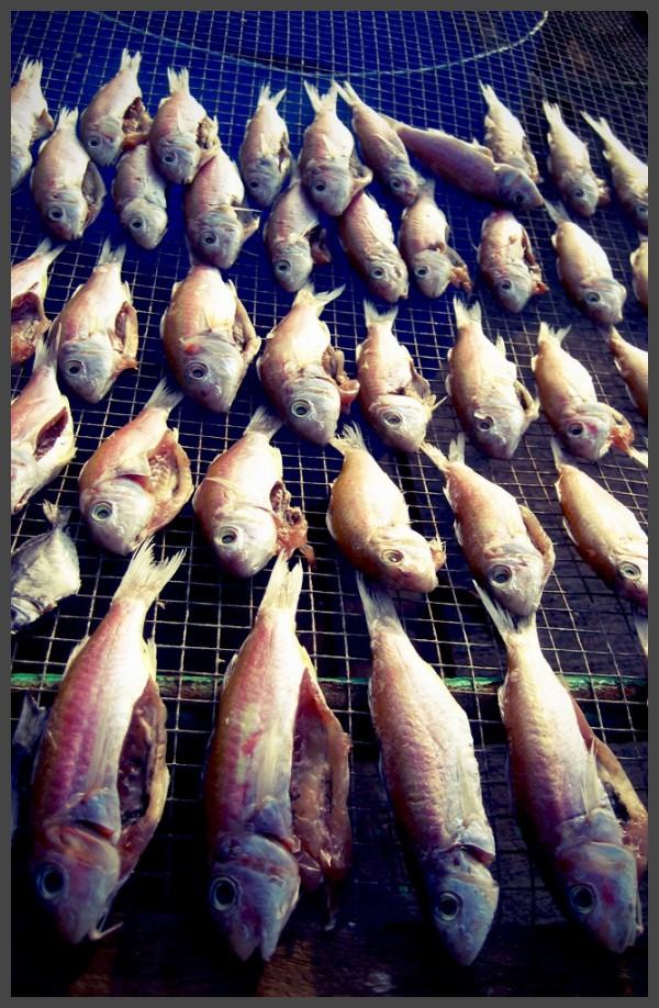 Fish drying in the sun on Cheung Chau Island, HK