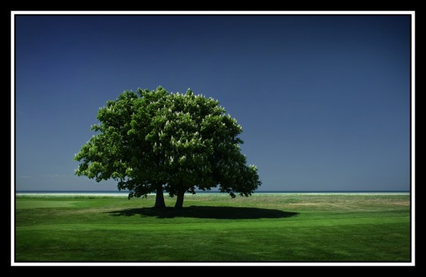 Golf course tree