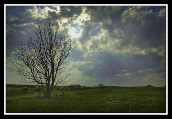 Barsebäck tree