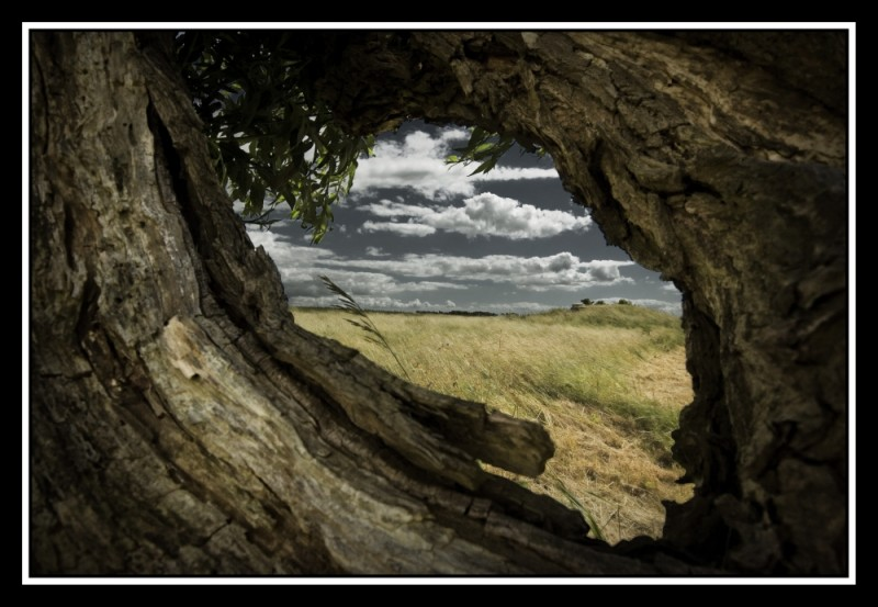 Through a tree