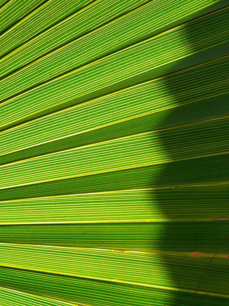 feuille de palmier plant nature photos vert pomme photoblog. Black Bedroom Furniture Sets. Home Design Ideas