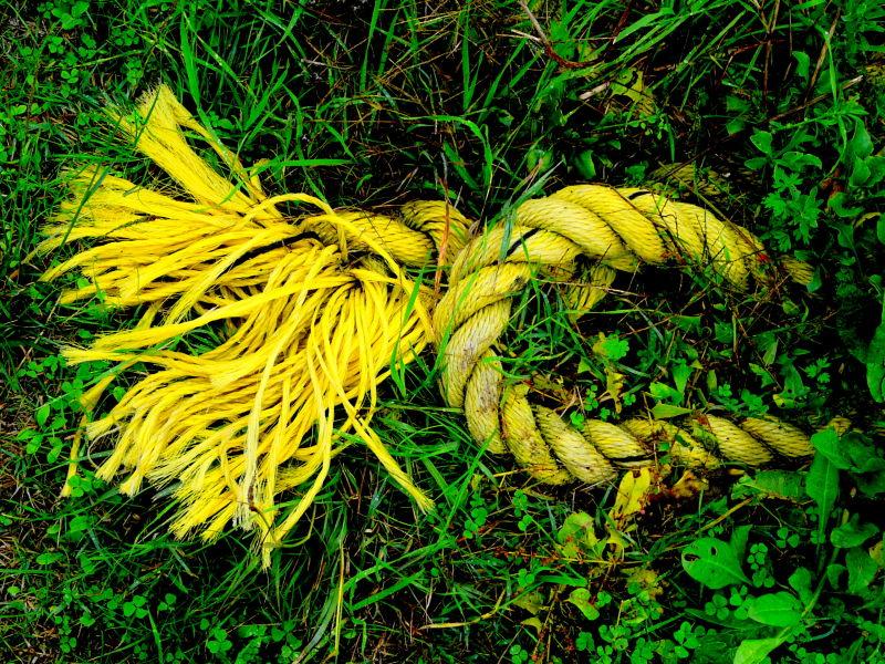 Collier jaune !!!!