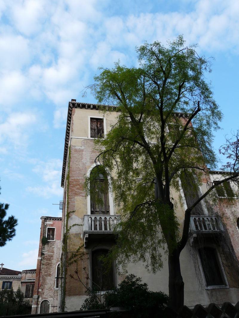 L'arbre qui cache ..........la maison