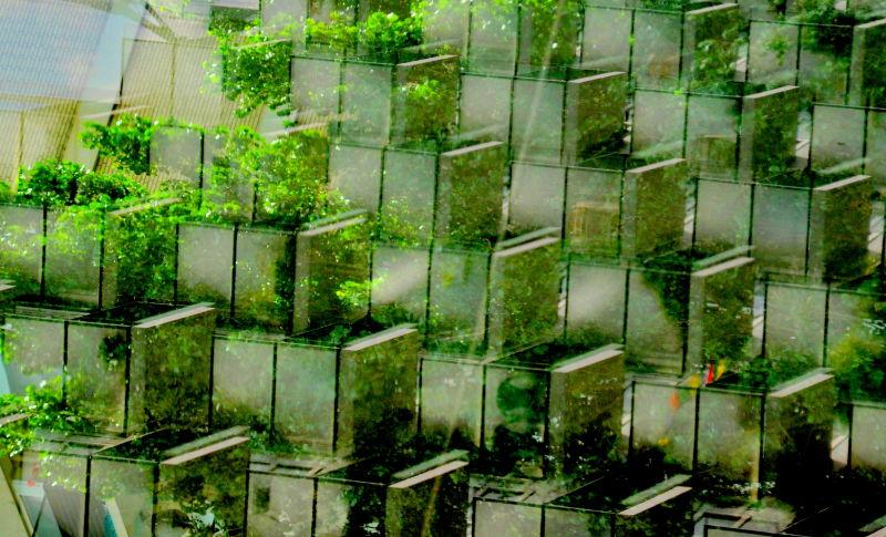 Balcons verdoyants