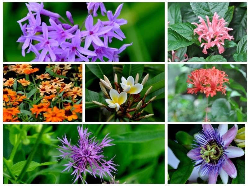 Jardin botanique Bâle