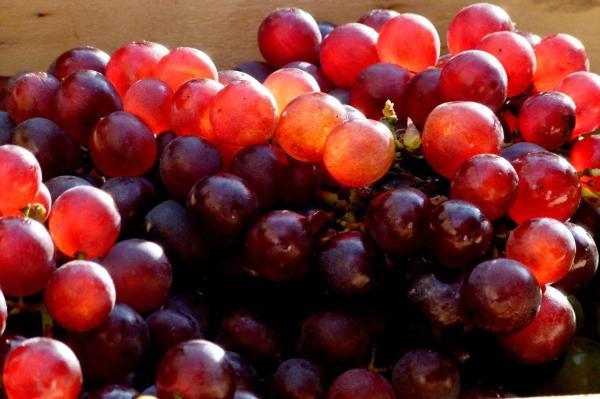Raisins sur le marché de Freiburg