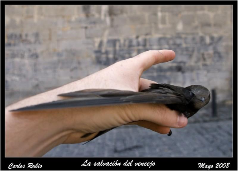 El regreso del ave