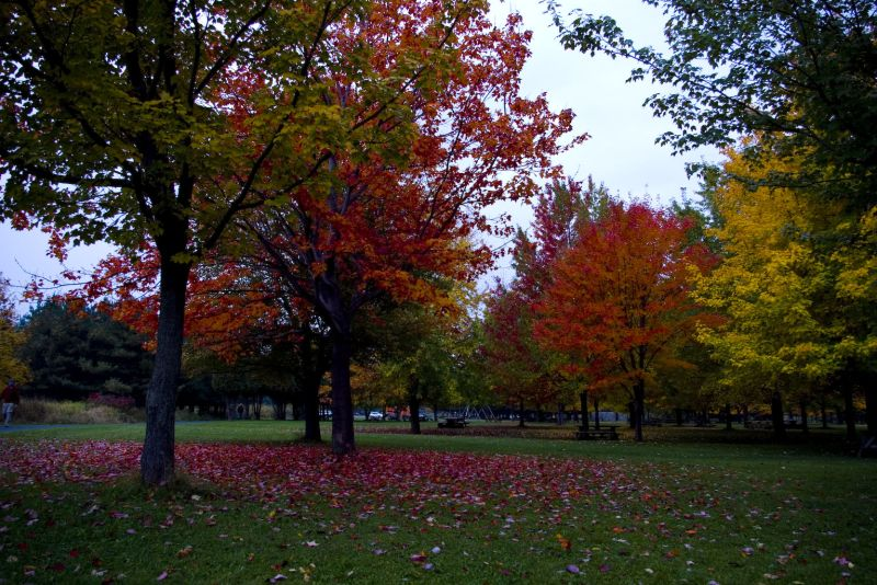 Colors of the Fall