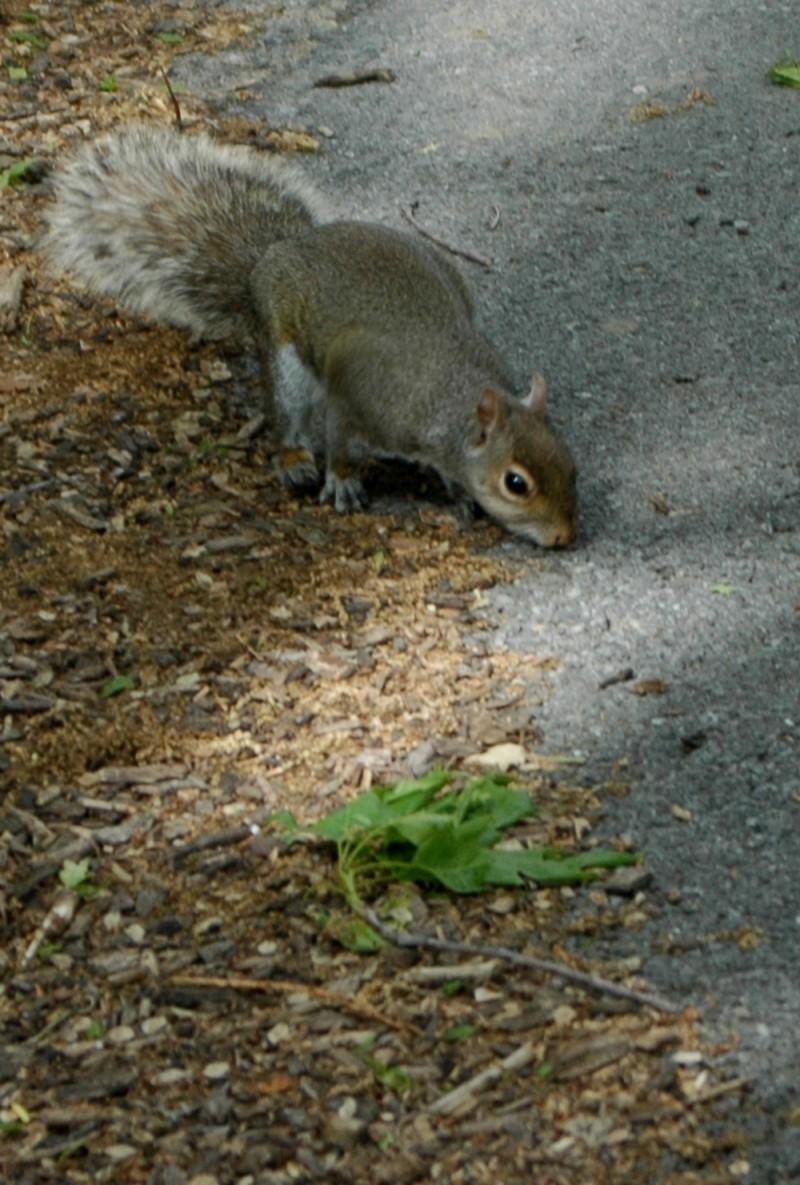 squirrel on campus
