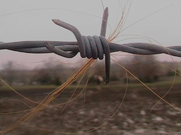 Barbed wire with horse hair