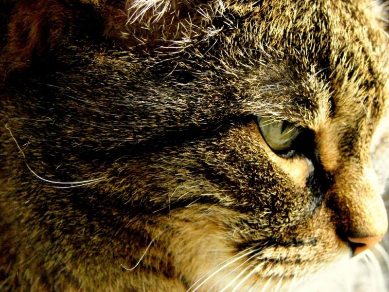 Cat eyes 2 !!!