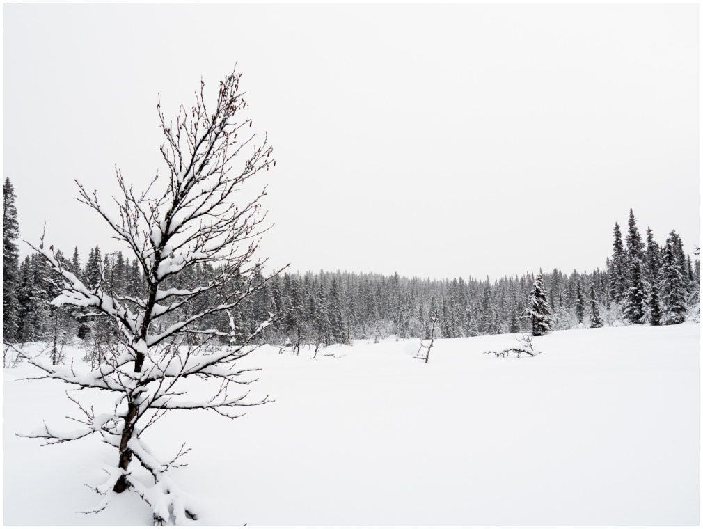 Nature sleeping cowered with white blanket.