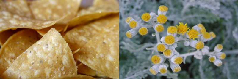 yellow, side by side, food, flowers