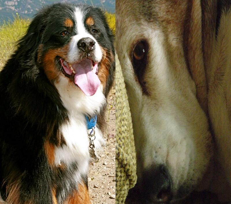 Pet, Side by side
