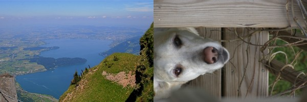 side by side, looking down, view, dog, Switzerland