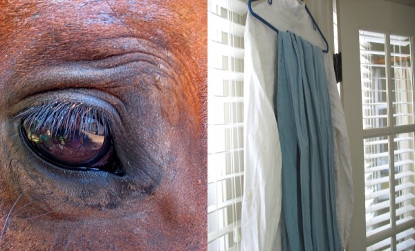 wrinkled, Eyes, Horse, clothes, jeans, white shirt