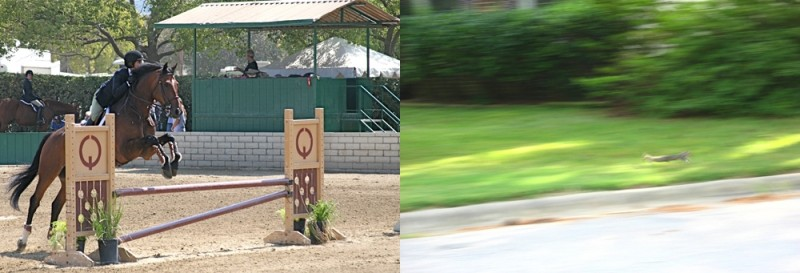 motion, horse, squirrel, rider, jumping, running